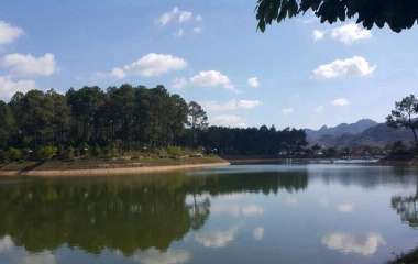 Admire the poetic beauty of the Ban Ang Pine forest in Moc Chau